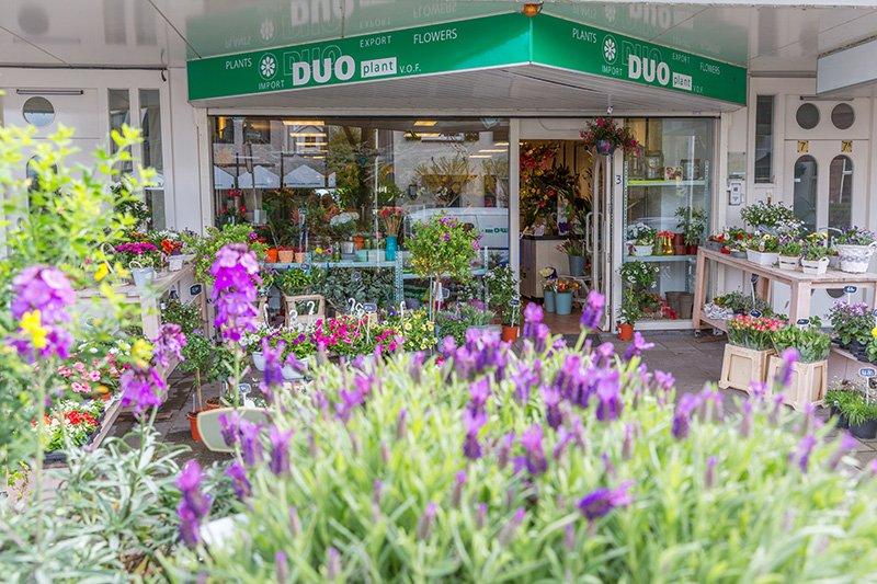 Duoplant Aalsmeer Centrum