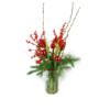 Duoplant - Amaryllis met Pinus, kerstballen, katjes en rode ilex in vaas