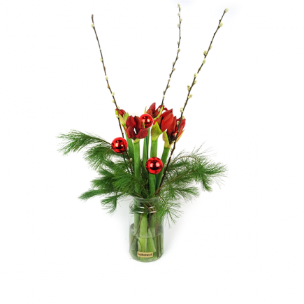 Duoplant - Amaryllis met Pinus, kerststuk met kerstballen en katjes in vaas