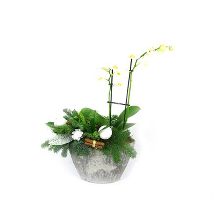 Duoplant - Ovaal Phalaenopsis in stoere grijze pot