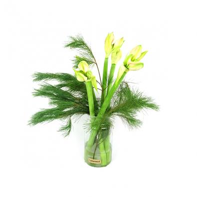 Duoplant - Witte Amaryllis met Pinus in vaas