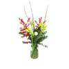 Duoplant - Witte kerst Amaryllis met Pinus, kerstballen en katjes in vaas