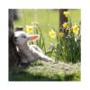 Duoplant - voorjaar workshop
